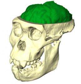 New evidence suggests that Au.sediba is the best candidate for the genus Homo