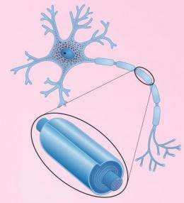 New nanoscale imaging may lead to new treatments for multiple sclerosis