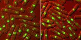New tasks attributed to Aurora proteins in cell division