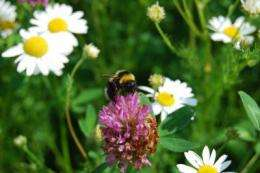 Pollination services at risk following declines of Swedish bumblebees