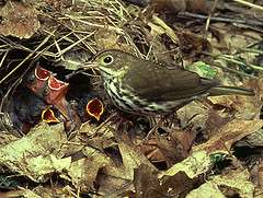 Research shows that soil calcium limits forest songbirds