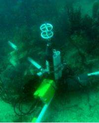 Study provides new tool to monitor coral reef 'vital signs'