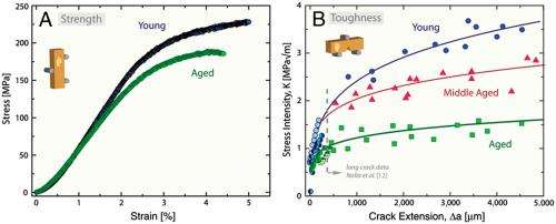 The brittleness of aging bones -- more than a loss of bone mass