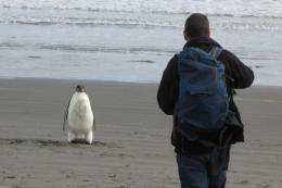 "The Emperor penguin, nicknamed ""Happy Feet"", was found wandering on a North Island beach in New Zealand"