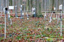 Wireless sensor network monitors microclimate in the forest