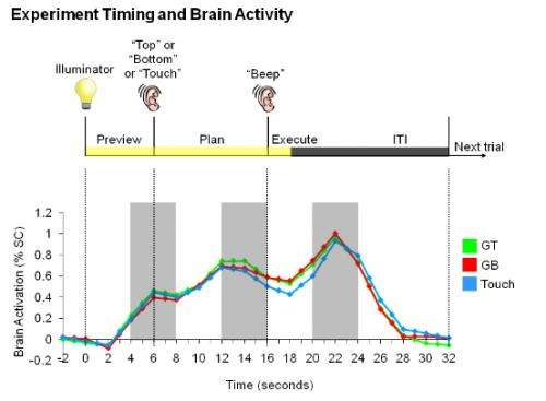 Researchers can predict future actions from human brain activity