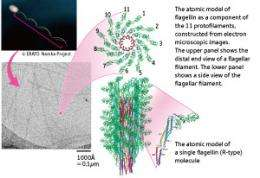 New imaging techniques reveal the workings of supramolecular nanomachines