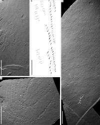 Researchers track half-billion year old predator