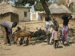 Scientists find H1N1 flu virus prevalent in animals in Africa