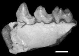 Anthropologist discovers new fossil primate species in West Texas