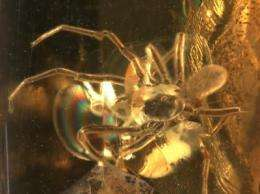 Hi-tech scans catch prehistoric mite hitching ride on spider