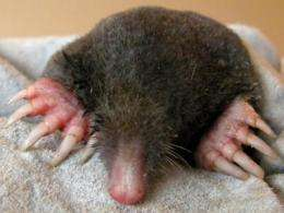 How the mole got its 12 fingers