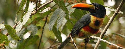 Planting trees may save Costa Rican birds threatened by intensive farming