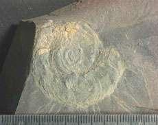 Welsh mudstones reveal ancient sponge ecosystem