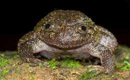 Scientists discover 12 new frog species in India (AP)