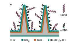 New biosensor is based on a nanowire crystal array