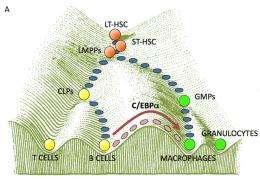 Cell Transformation a la carte