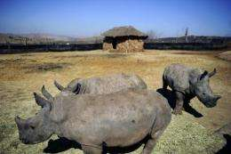 Conservationists say rhino poaching in South Africa has hit a record high