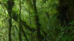 Satellite images help species conservation