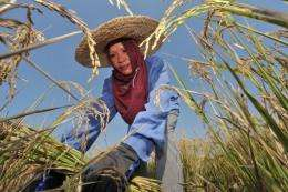 The International Rice Research Institute is calling for rice farmers to cut back on their use of pesticides