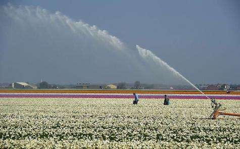 A field of flowers is irrigated