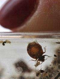 Alarming combo: Bedbugs with 'superbug' germ found (AP)