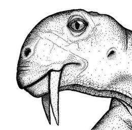 Archaeologists discover saber-toothed vegetarian (AP)