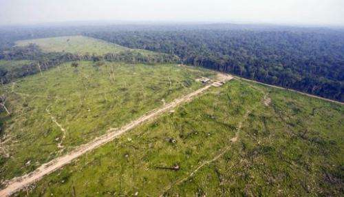 A sharp increase in forest destruction in March and April in the Amazon has led Brazil to set up an emergency task force