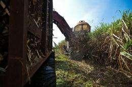 A sugar cane harvester at work in Calimete, Matanzas province, Cuba