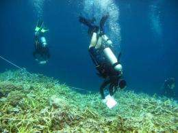 A team of marine biologists from the The Nature Conservancy inspect coral reefs effected by bleaching