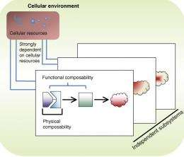 Biological circuits for synthetic biology
