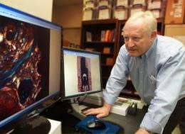 Bone-creating protein could improve dental implant success
