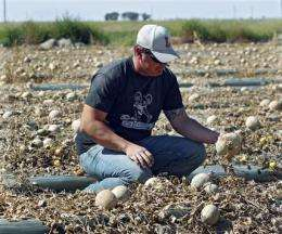 Cantaloupe outbreak is deadliest in a decade (AP)