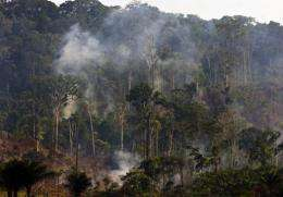 Cattle raising is one of the main causes of deforestation in the Brazilian Amazon forest