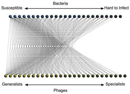 Patterns of bacteria-virus infection networks revealed