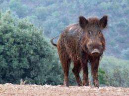 Changes in land use favor the expansion of wild ungulates