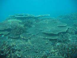 Climate will damage reefs at