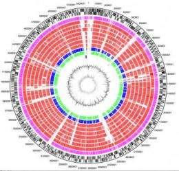 Crowd-sourcing the E. coli O104:H4 outbreak