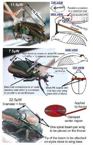 Cyborg insects generate power for their own neural control