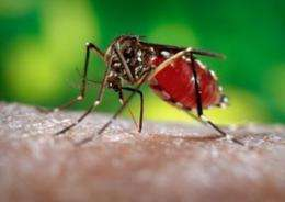 Daily temperature fluctuations play major role in transmission of dengue, research finds
