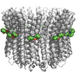 Deciphering the mechanism of an ion pump