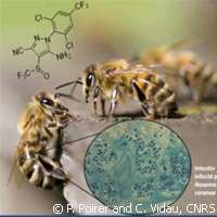 Even low doses of insecticides put honeybees at risk