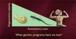 How can the salamander help fight degenerative disease?
