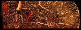 Fast new method for mapping blood vessels may aid cancer research