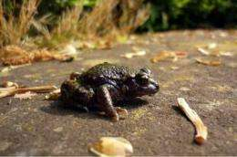 Fighting massive declines in frog populations with bacteria and fungicides