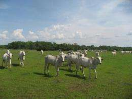 Grazing as a conservation tool