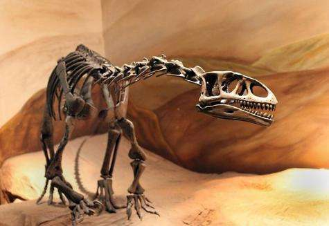 Handout picture released by the Museo Paleontologico Trelew showing a real-size replica of the fossil