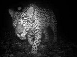 Hey tapir, jaguar, smile! You're on Candid Camera (AP)