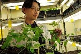 How do plants fight disease?