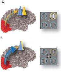 How our brains keep us focused